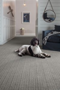 Purrsuasion backdrop carpet | Custom Floors